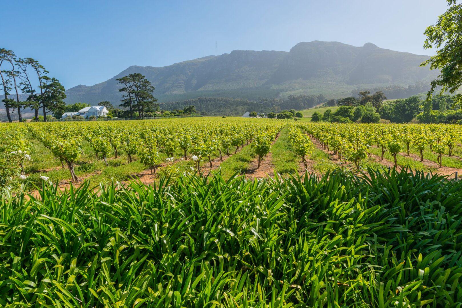 Voyage V Lo Afrique Du Sud Libert V Lo Route Nature Vin